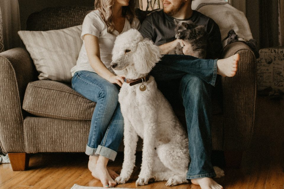 a couple moving to North Hills with a pet